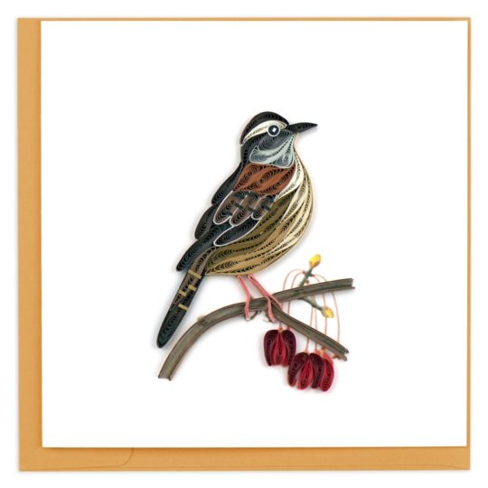 carolina wren quilling card