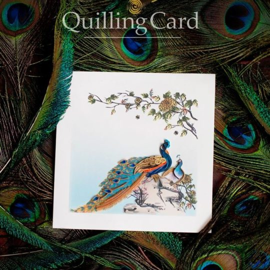 fancy peacock quilling card