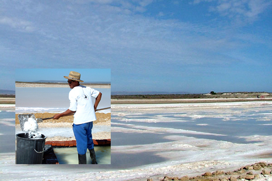 fair trade salt harvest